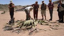 Namib Desert Tour from Swakopmund, Swakopmund, 4WD, ATV & Off-Road Tours
