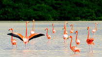 5 Days of Flamingos, Henequen and Mayan Culture, Merida, Multi-day Tours