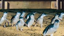 Halfdaagse Phillip Island Penguin Parade Tour, Melbourne, Private Sightseeing Tours