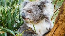 Mornington Peninsula Family Fun Tour, Melbourne, Private Sightseeing Tours