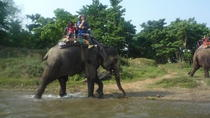 Chitwan Jungle Safari Tour, Kathmandu, Multi-day Tours