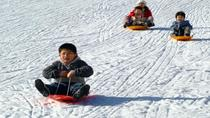 Sled Experience from Seoul, Seoul, Seasonal Events
