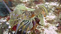 Two-Dive Tour in Cozumel from Playa del Carmen, Playa del Carmen, Scuba Diving