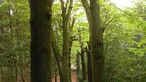 Tuscan Truffle-Hunting Experience
