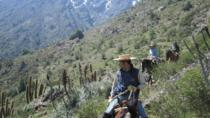 Horse Riding Tour in the Andes Foothills Including Picnic, Santiago, Horseback Riding