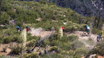 Mt Wilson Mountain Bike Enduro Day, Los Angeles, Bike & Mountain Bike Tours