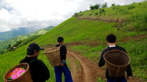 2-Day Hill Tribe Walking Experience, Chiang Rai