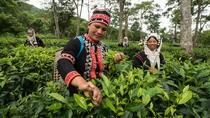 2-Hour Araksa Tea Plantation Tour, Chiang Mai, Plantation Tours