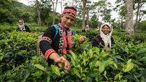 Araksa Tea Garden Experience with Transfer, Chiang Mai, Day Trips