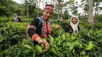 Guided Araksa Tea Plantation Tour near Chiang Mai , Chiang Mai, Plantation Tours