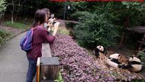 Half Day Private Tour: Chengdu Research Base of Giant Panda Breeding, Chengdu, Private Sightseeing...