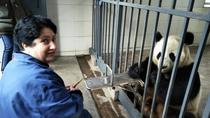 One Day Volunteer Experience at Dujiangyan Panda Base, Chengdu, Volunteer Tours