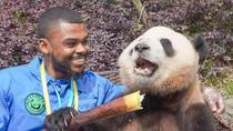Panda Holding Experience and Dujiangyan Irrigation System In Chengdu, Chengdu, Day Trips