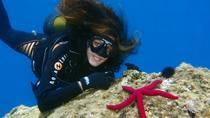 Scuba Diving Beginners 1 dive, Split, Day Trips