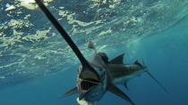 Four-Hour Fishing Tour in Dominica, Dominica, Fishing Charters & Tours