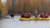 Half-Day Snake River Scenic Float Trip from Jackson, Jackson Hole, River Rafting & Tubing
