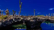Los Tuneles - Isabela Island, Galapagos Islands, Nature & Wildlife