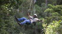 Tsitsikamma Canopy Tour, Garden Route, Ziplines