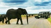 Kruger National Park Full-Day Safari from Hazyview, Kruger National Park
