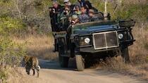 Sabi Sand Sunset Safari, Kruger National Park, Safaris