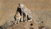 12 DAYS BEST OF KENYA AND TANZANIA PRIVATE LUXURY LODGE SAFARI, Nairobi, Cultural Tours