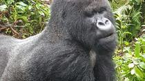 3 DAYS 2 NIGHTS GORILLA AND GOLDEN MONKEY TREKKING IN RWANDA, Kigali, Multi-day Tours