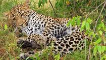 3 DAYS PRIVATE SAFARI TO MAASAI MARA NATIONAL PARK AND AA LODGE, Nairobi, Attraction Tickets