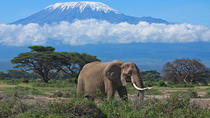 7 day safari to Maasai Mara, Nakuru, Naivasha and Amboseli, Nairobi, Cultural Tours