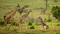 Arusha National Park Guided Day Tour from Arusha, Arusha