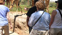 David Sheldrick Elephant Orphanage and Giraffe Center Full-Day Tour from Nairobi, Nairobi, null
