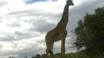 Hell's Gate National Park Private Bike Tour from Nairobi, Nairobi, null