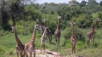 Ngorongoro National Park and Game Drive: Guided Day Tour from Arusha, Arusha, Day Trips