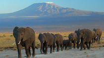 Overnight tour to Amboseli National Park, Nairobi, Attraction Tickets