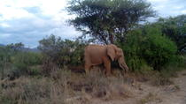 Private 3-Day Tsavo Safari from Mombasa, Mombassa