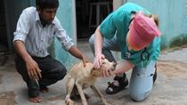Animal Rehabilitation Center Visit with Taj Mahal Tour, Agra, Private Sightseeing Tours