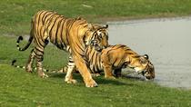 Delhi to Jaipur transfer via Bharatpur and Ranthambore park visit, New Delhi, null