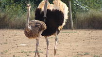 Ostrich Farm Visit in Mallorca, Mallorca, Nature & Wildlife