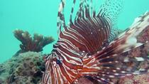 Dykning ved Kata Beach, Phuket, Scuba Diving