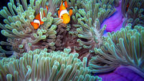 Full-Day Racha Noi and Racha Yai Snorkeling from Phuket , Phuket, Snorkeling