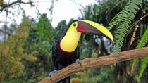 Bird Watching Near the Arenal Volcano, La Fortuna, Nature & Wildlife