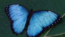 Butterfly and Fauna Garden at Danaus Eco-Center, La Fortuna, Eco Tours