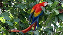 Carara National Park Tour, Central Pacific, Nature & Wildlife