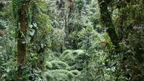 Monteverde One Day Tour from La Fortuna, San Jose, Cultural Tours