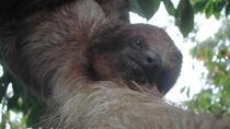 Slothies and Birds, La Fortuna, Cultural Tours
