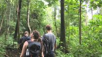 3-Day Chiang Dao Mountain Trek, Chiang Mai, Multi-day Tours