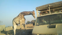 Full Day Safari Experience From Johannesburg With Ziplining , Johannesburg, Nature & Wildlife