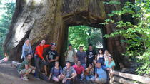 Yosemite 3-Day Camping Tour, San Francisco, Multi-day Tours