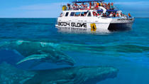 Whale Watch Excursion from the Big Island, Big Island of Hawaii, Snorkeling