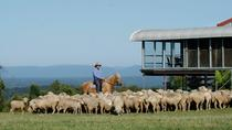 Tobruk Sheep Station: Farm and Australian Outback Experience, New South Wales, Day Trips