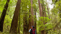 Redwoods of Mill Valley and Marin Walking Tour from Sausalito, San Francisco, Hiking & Camping